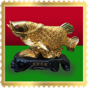 ปลามังกรทองสินค้ามงคล